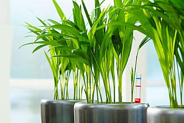 Hydrokultur Das Pflegeleichte Pflanzsystem Ohne Blumenerde